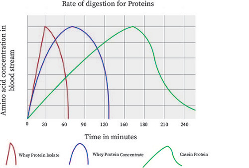 New Direction Advanced - Rate of digestion for Proteins
